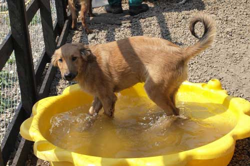 Rosenbund-Charity Hund beim Baden im Tierheim