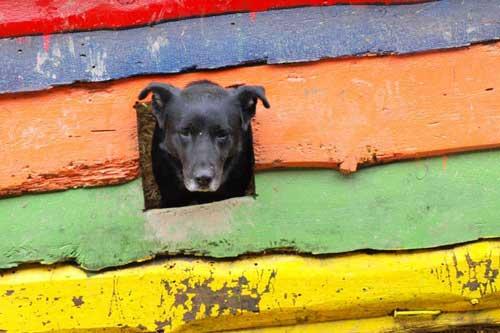 Rosenbund-Charity Hund schaut durch eine bunte Wand im Tierheim
