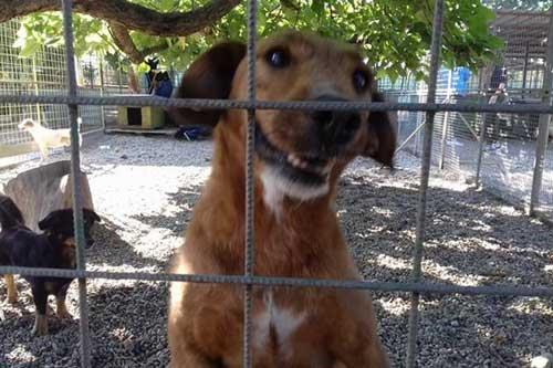 Rosenbund-Charity Hund hinter Gittern im Tierheim