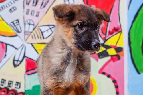 Rosenbund-Charity Babyhund im Tierheim