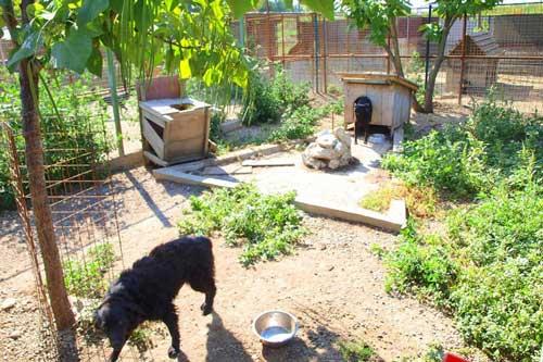 Rosenbund-Charity Hunde mit Hütte im Tierheim